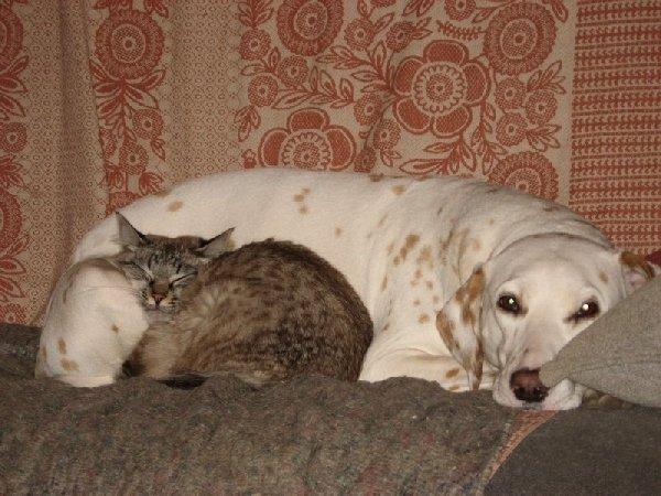 Живут, как кошка с собакой...