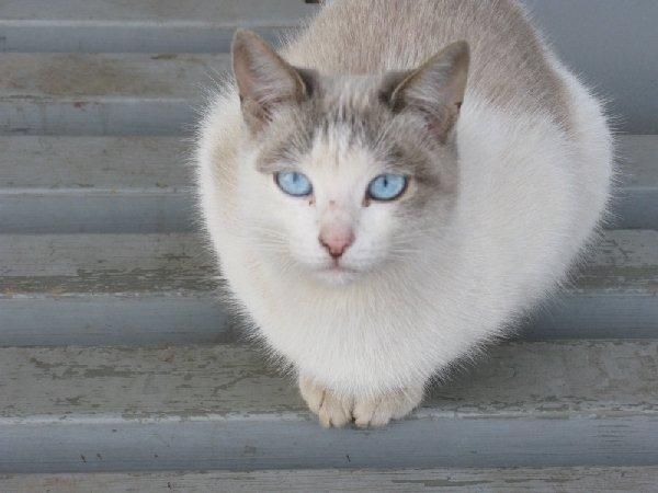 уличные кошки в Уфе