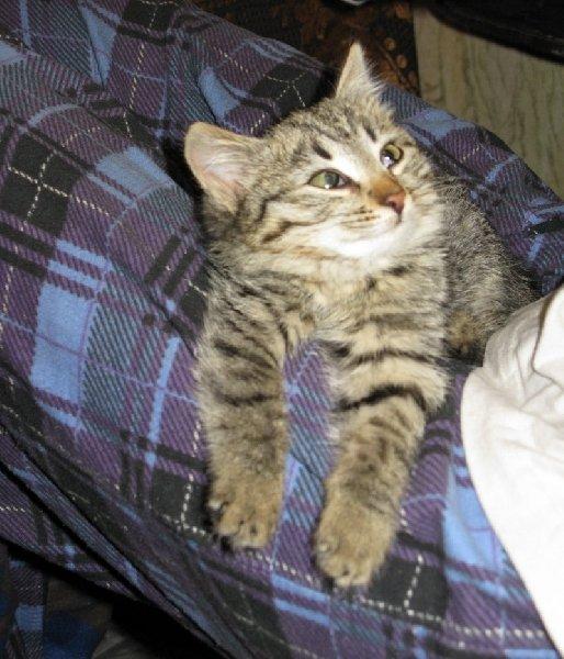 котенок найденный в электричке