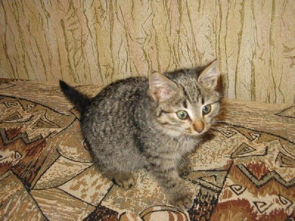 котенок найденный в электричке - долгой и счастливой жизни дай тебе Бог!