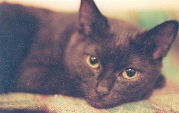 Маленький Кисель - серьезный кот