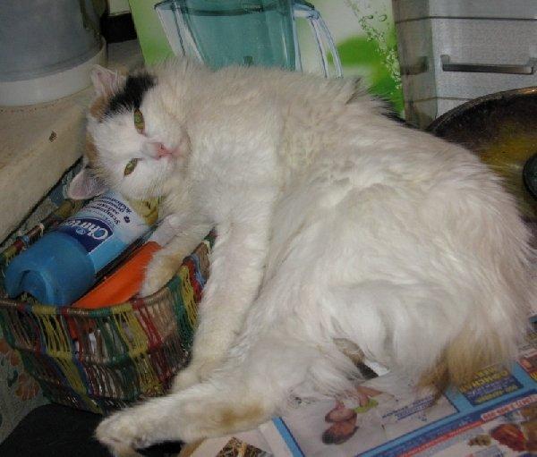 Киска Алиса отдыхает.