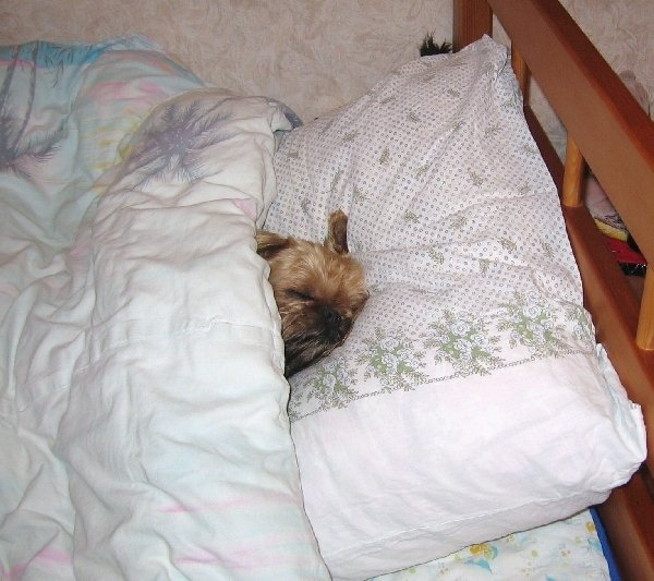 Как хорошо: на улице зима, холод и снег идёт, а я сплю под тёплым одеялом...