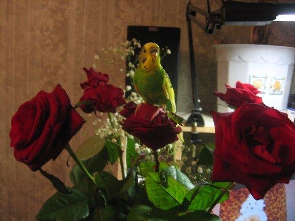 букет алых роз и ... Кеша!!!
