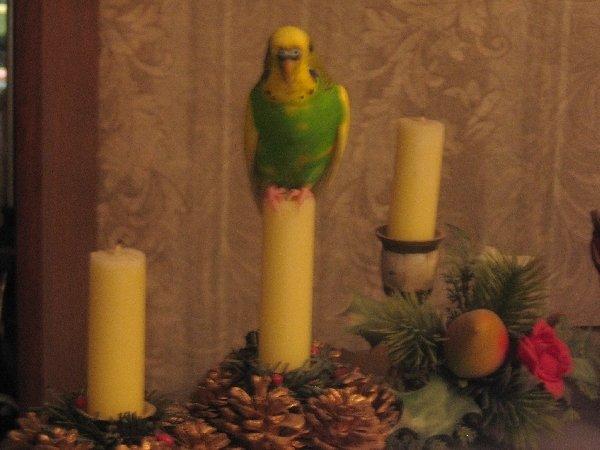Кеша, летая сел на свечу!!!
