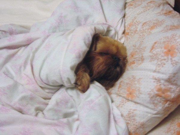 Данюся спит в маминой и папиной кравати