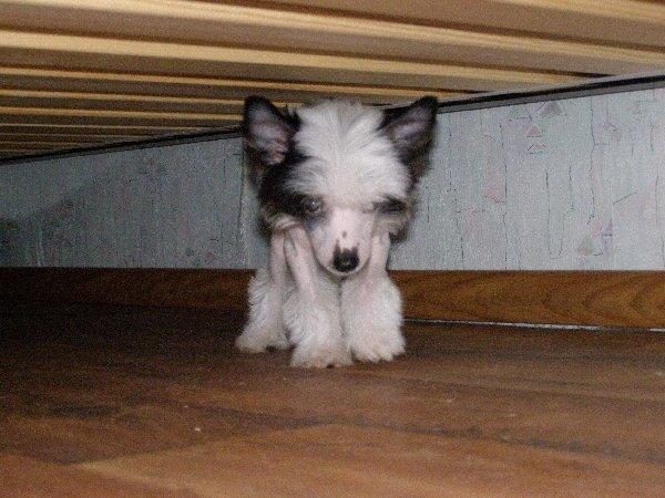 пока стоит под кроватью..
