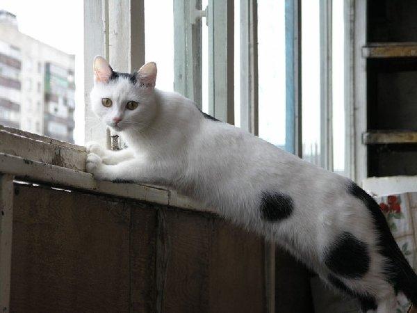 Аниска на балконе.