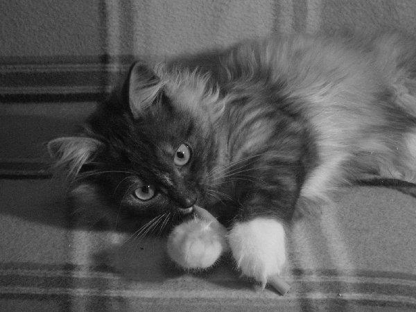 Сонька , 5 месяцев