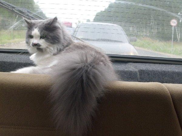 Кузино любимое место в машине!