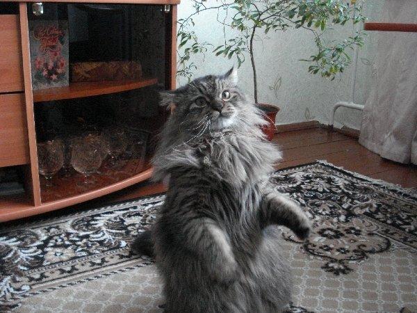 Наш кот циркач.....(зовут Кокос)