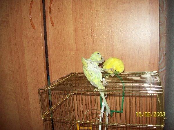 умер попугай