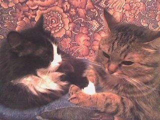 Мои любимые иждивенцы Лиза и Филя