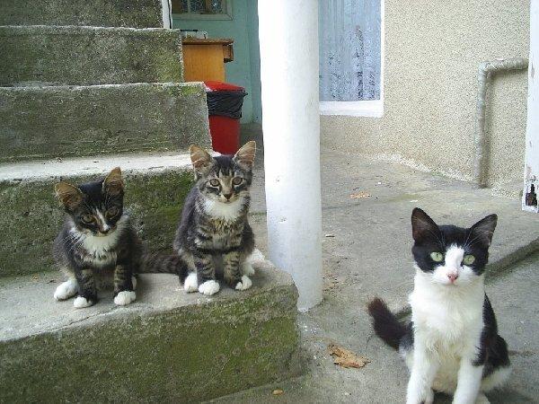 дворовые котята из города Сочи