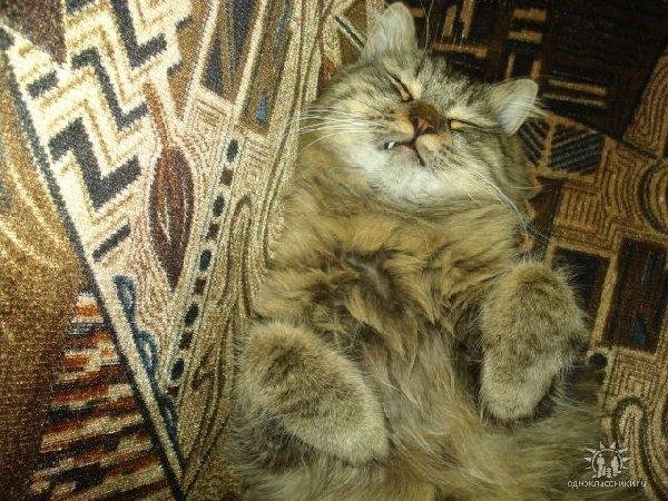 Сладко сплю.....