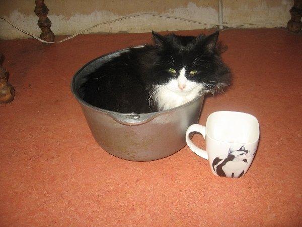 Из чашки я вырос, пора в котел  переезжать.