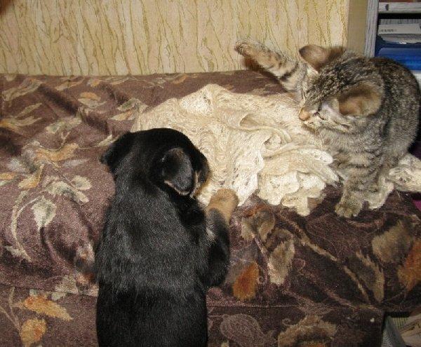 """кися Масяня: \\\"""" Не лезь сюда, я здесь сплю!\\\"""""""