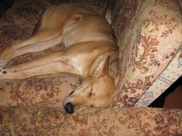 Герда спит,добрая, пугливая душа..