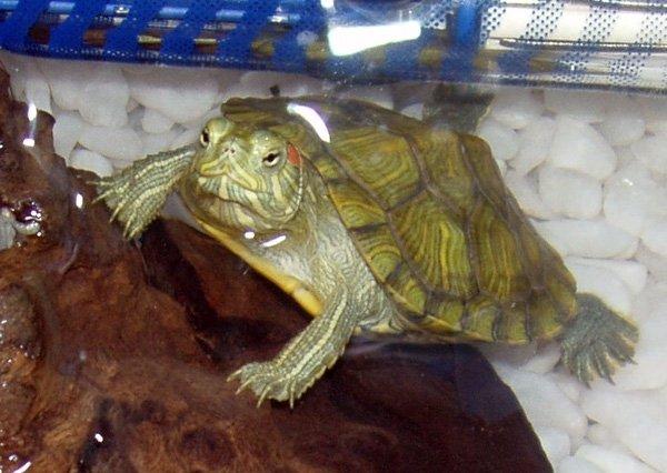 Леонардо любит попозировать перед камерой :)