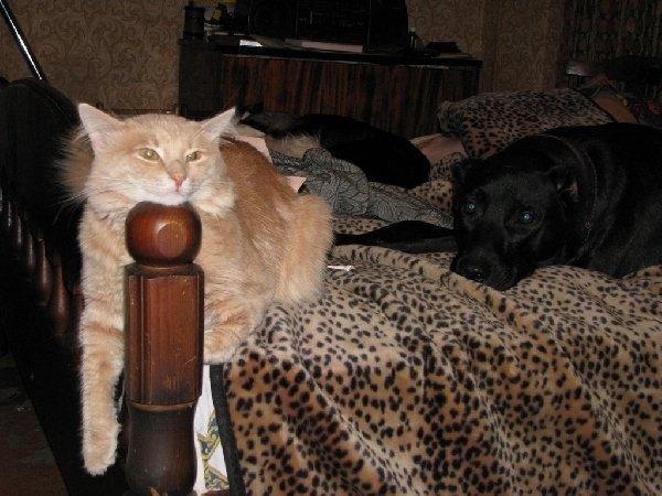 кот Фунт и пес Дзирт. Отдых после игр.