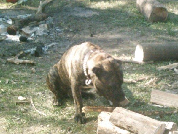 Помогает дрова колоть