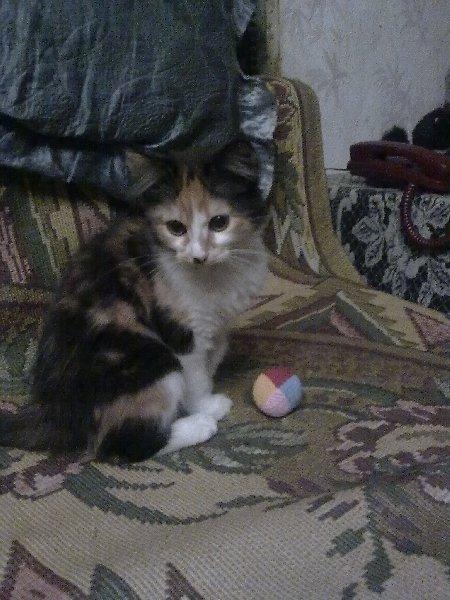 Когда в доме появляется котенок...