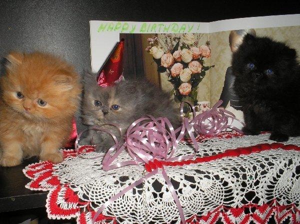 Котята поздравляют с днем рождения нашего американского друга.