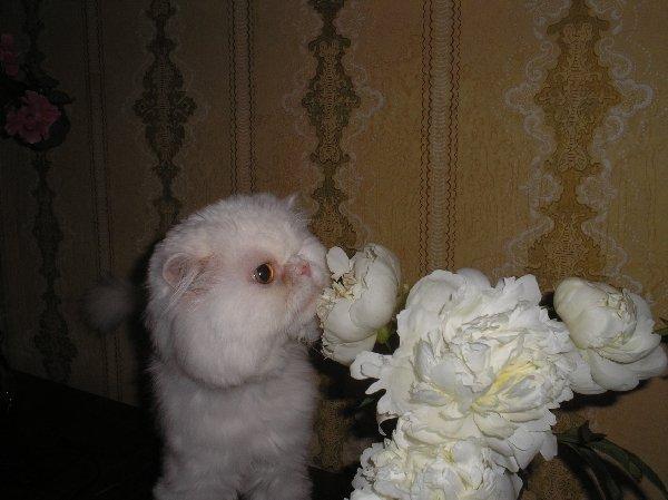Перед грозой так пахнут розы ... кхм, то есть пионы.