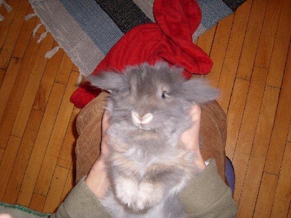 я кролик,просто странный!