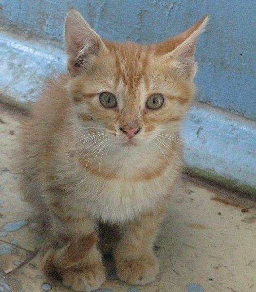 котенок живущий в подъезде