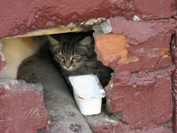дикий котенок живущий в подвале