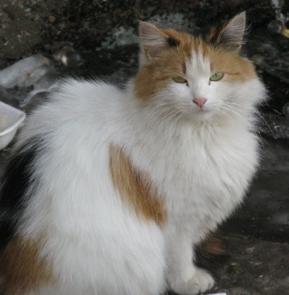 бездомная кошка живущая в подвале