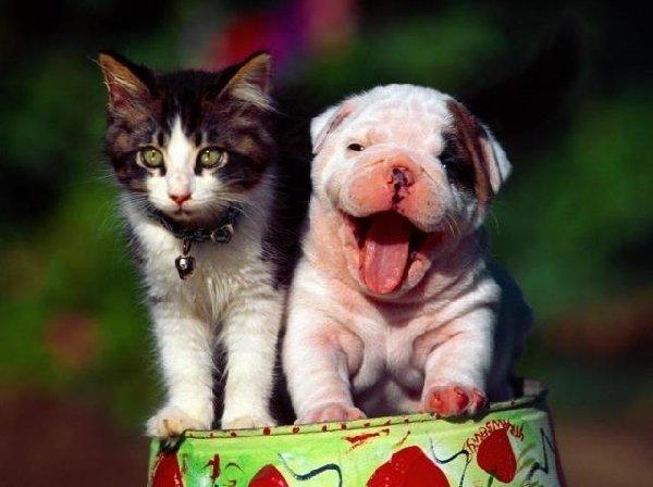 Кошки и собаки: если дом общий