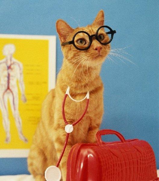 Коты и кошки лечат!