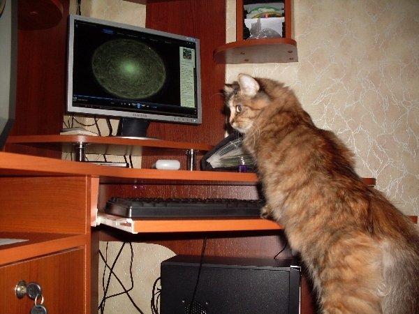 Кошки - это интересно