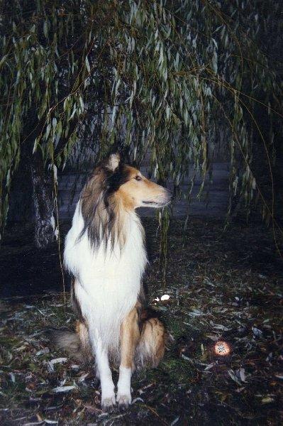 Мой самый любимый.... Самый благородный и смелый. Жалко, что собачий век недолог...