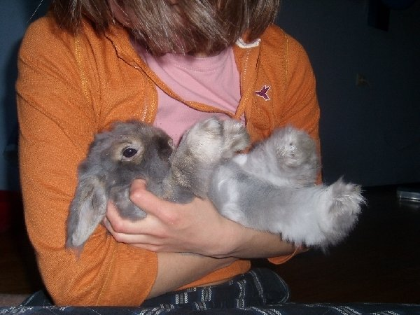 мой любимый зайчик