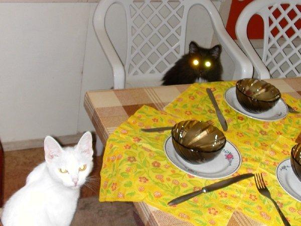 Кошки на месте: можно рыбу подавать! (Алиска и Дуся)
