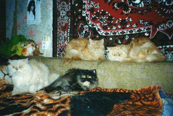 Коты моей подруги