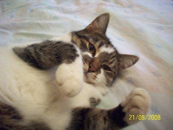 Этого котяру зовут Михан