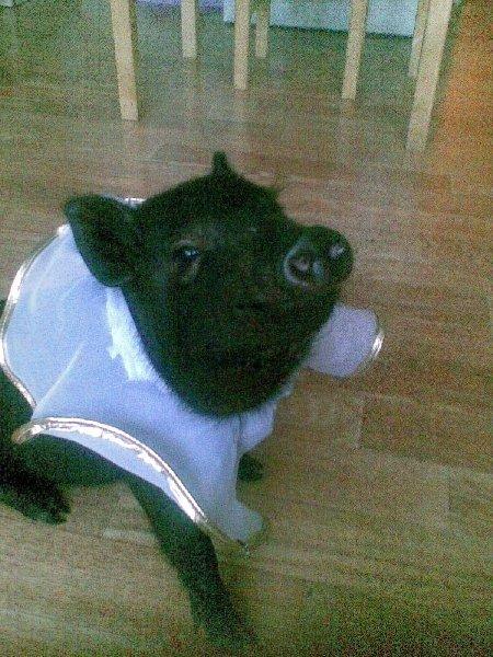 нет красивее меня потаму что я свинья