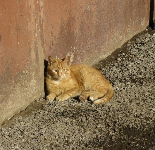 я на солнышке сижу... котик живущий в подвале..все живое любит солнышко...