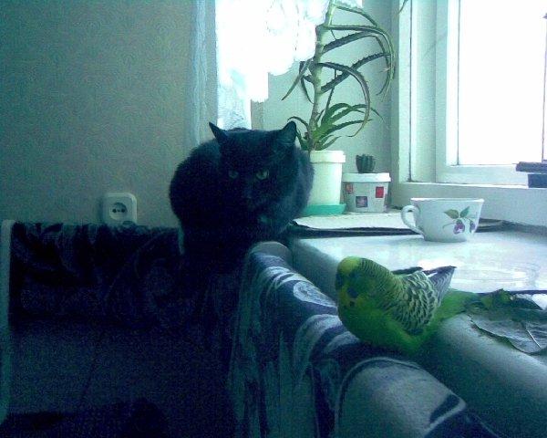 Соня и Кеша друзья