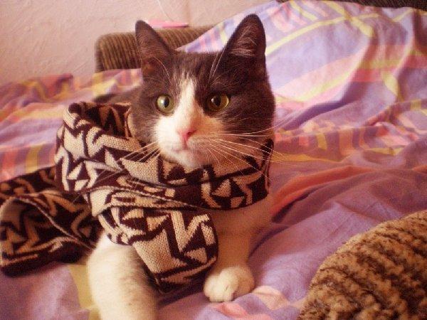 Саймон.Важный кот.