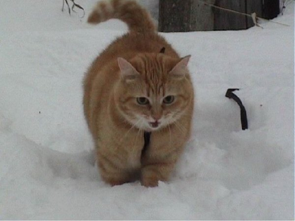Зимняя охота!