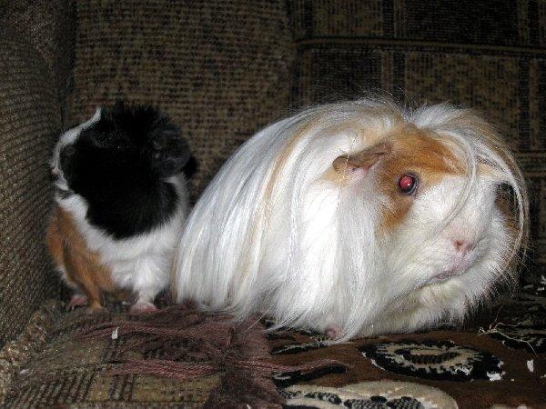 Дарья и Гавриил