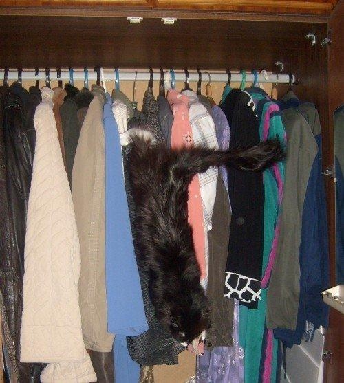 Покидает шкаф после ревизии