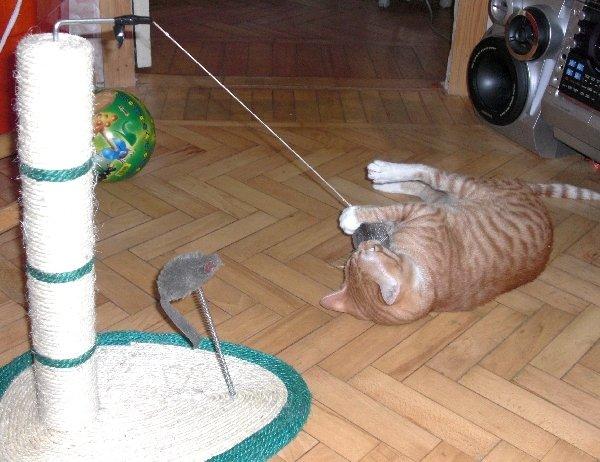Поймалась мышка!!!