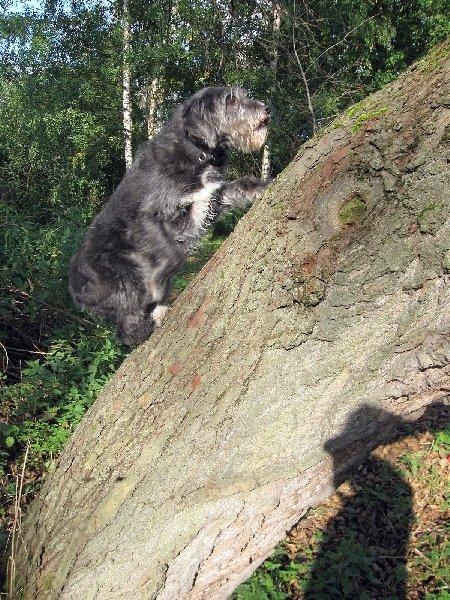 Джонни-любитель лазать по деревьям!