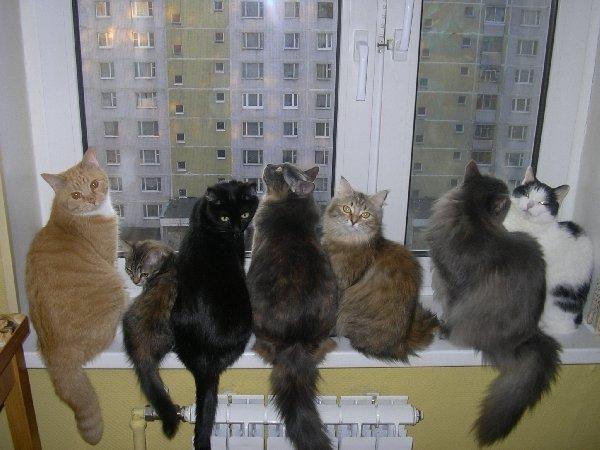 Маленькие кошечки, сели на окошечко!!!